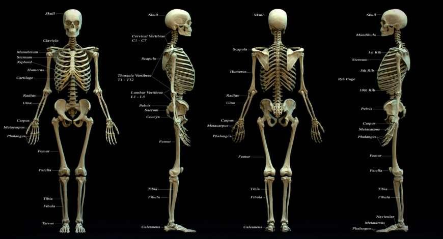 Curso grátis de Anatomia e Fisiologia Humana