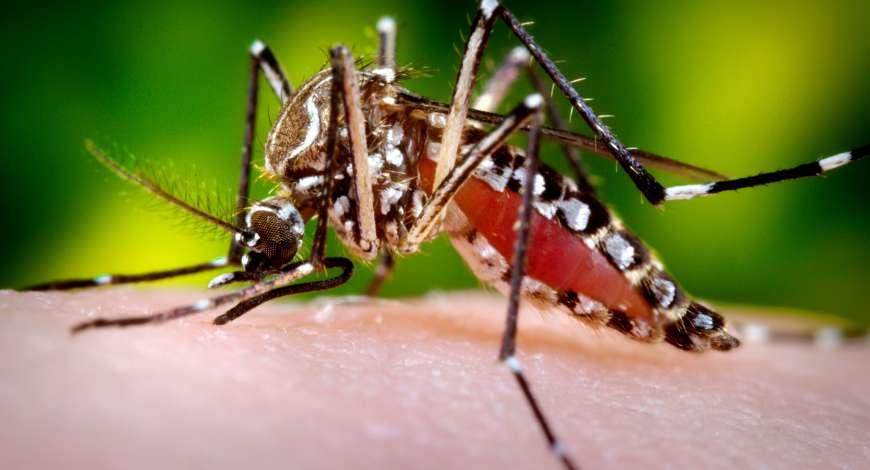 Curso grátis de Prevenção e Combate ao mosquito Aedes aegypti