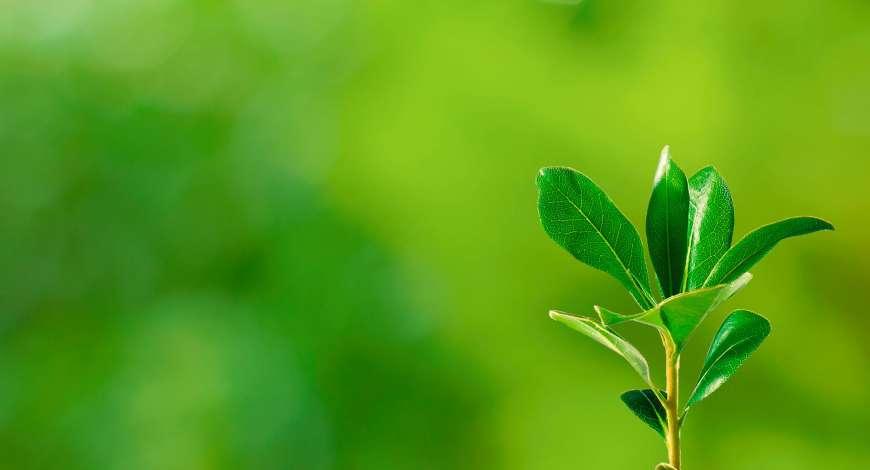 Curso grátis de Saúde Ambiental